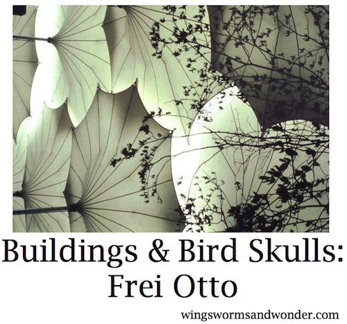 Frei Otto is an excellent example of ecological literacy in action. Click through to learn how he creates structural harmony with both people and planet through play!