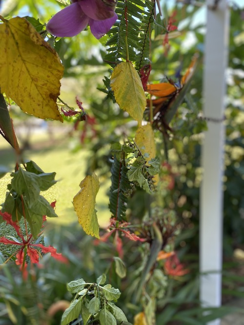 Wonder Wednesday 110! Create a garland of flowing fall flora with Wings, Worms, and Wonder